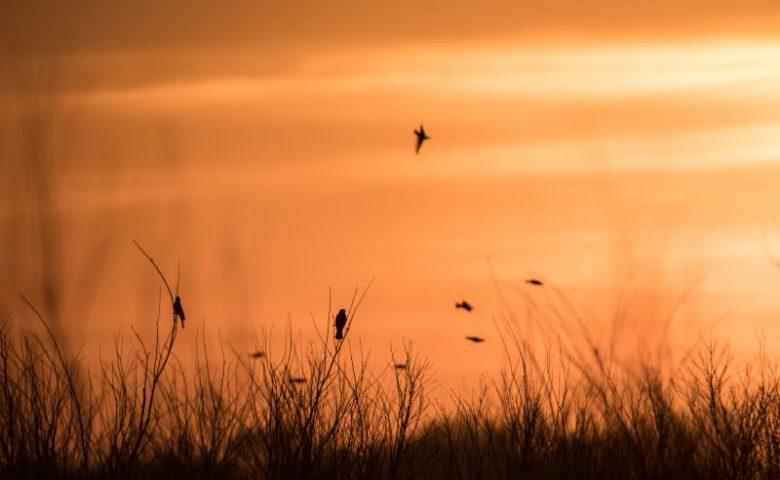 Nebraska-Crane-Trust-Sunset-0371-1-800x500